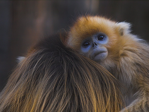 Monkey Pictures9