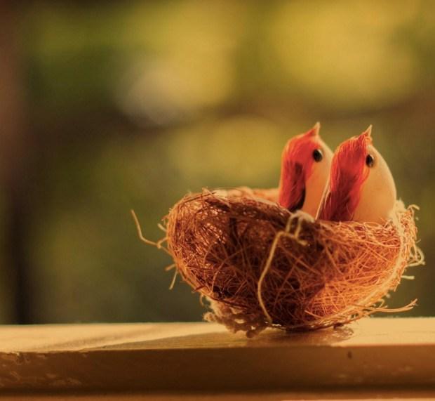 Beautiful birds in Nest
