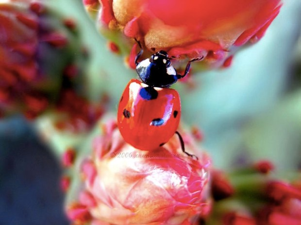ladybug adventures