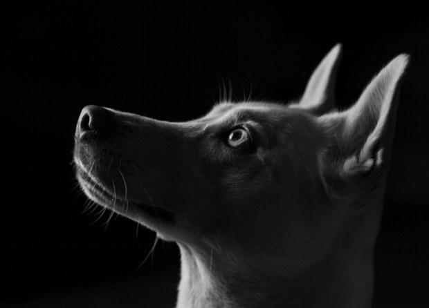 Dog (© Colin Reid)