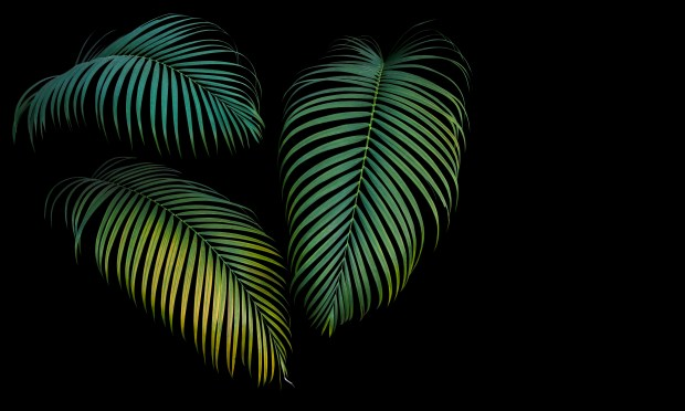 Green and yellow Palm leaves | Nature Wallpaper