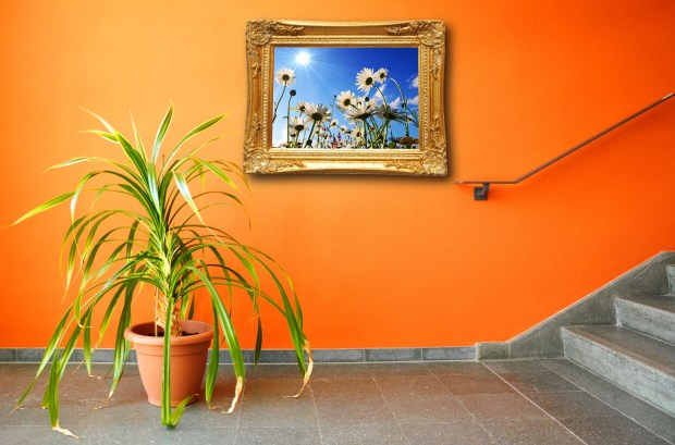 picture on a wall and plant showing interior concept