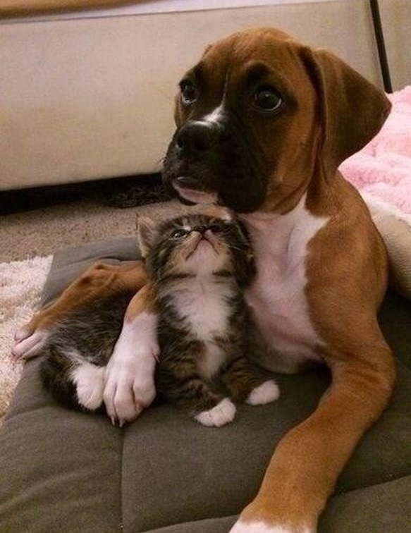 Nothing like a protective sibling