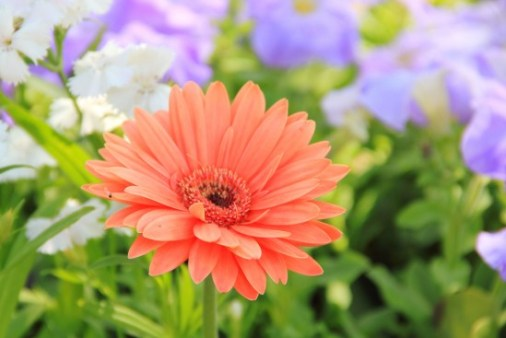 Daisy Images 6