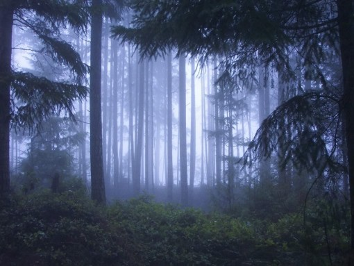 Forest pictures 13