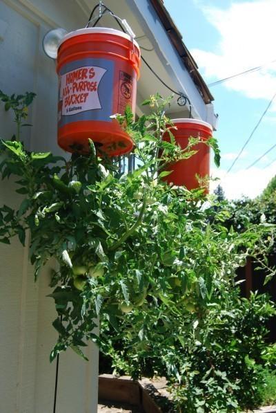 What Plants Put Pots