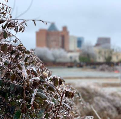 a view of the downtown greensboro skyline in the background with an ice covered bush in the foreground