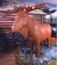 Lenny-The-Moose