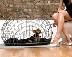 doggie-crate.jpg