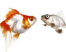 suspendedfish.jpg