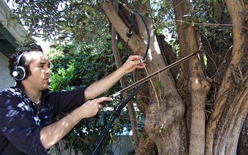 treemusic2.jpg
