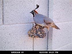 bird-cam-3.jpg