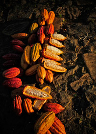 AmmaChocolates-image-4.jpg
