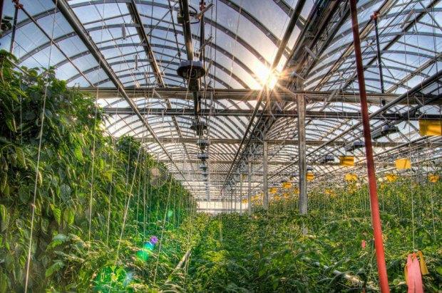 lufa-farm1.jpg