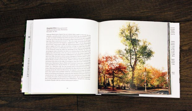 new_york_city_of_trees_1.jpg