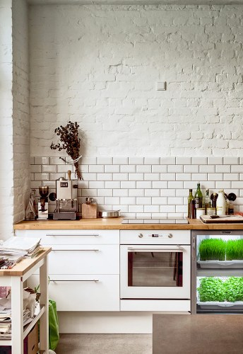 Quick and Easy Microgreens With Hamama's Home Gardening Kit