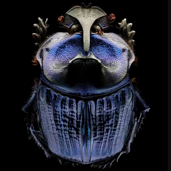 Remarkable Portraits of Insects - COOL HUNTING