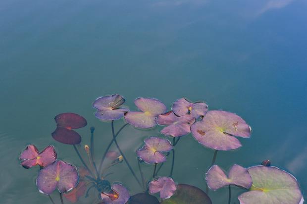 Dom-Perignon-Rose-2.jpg