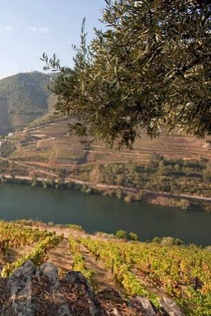esporao-wines-2b.jpg