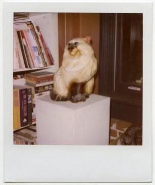 EricYanhkerPolaroid-cat.jpg