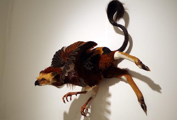 beast-and-birds-10.jpg