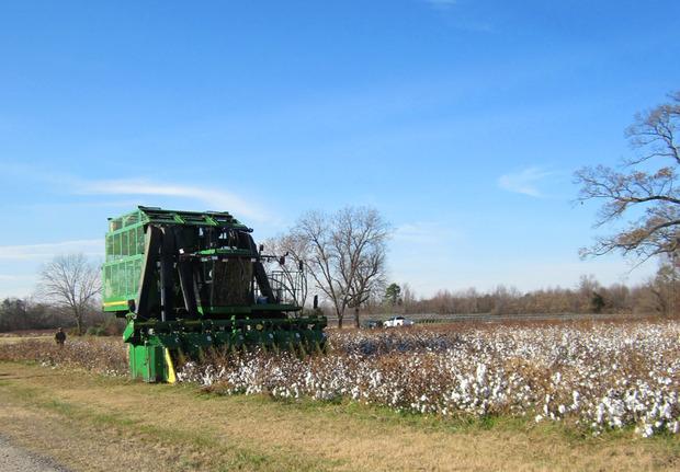 Raleigh-Denim-Organic-Cotton-Harvest.jpg