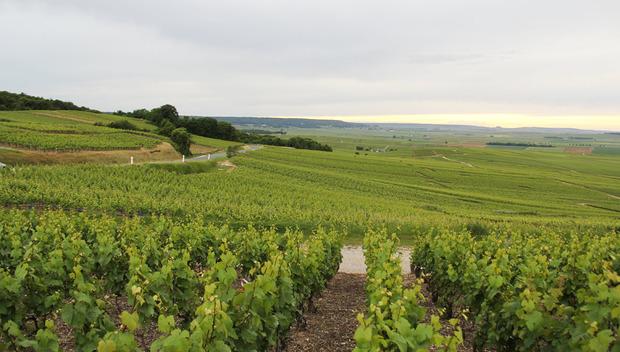 gh-mumm-vineyard-2.jpg