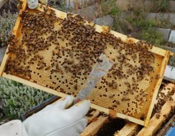 arlos-honey-farm-kelowna-1.jpg