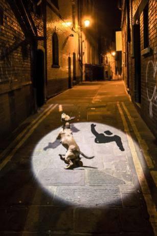 Shadowing-Bristol-01a.jpg