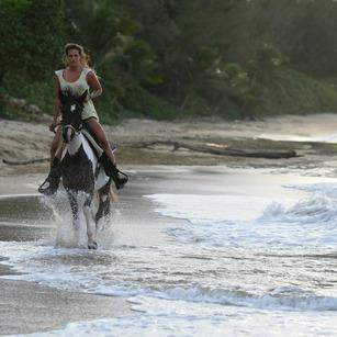 nikon-d750-beach-horse.jpg