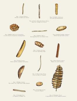 Fries-of-New-York-5.jpg