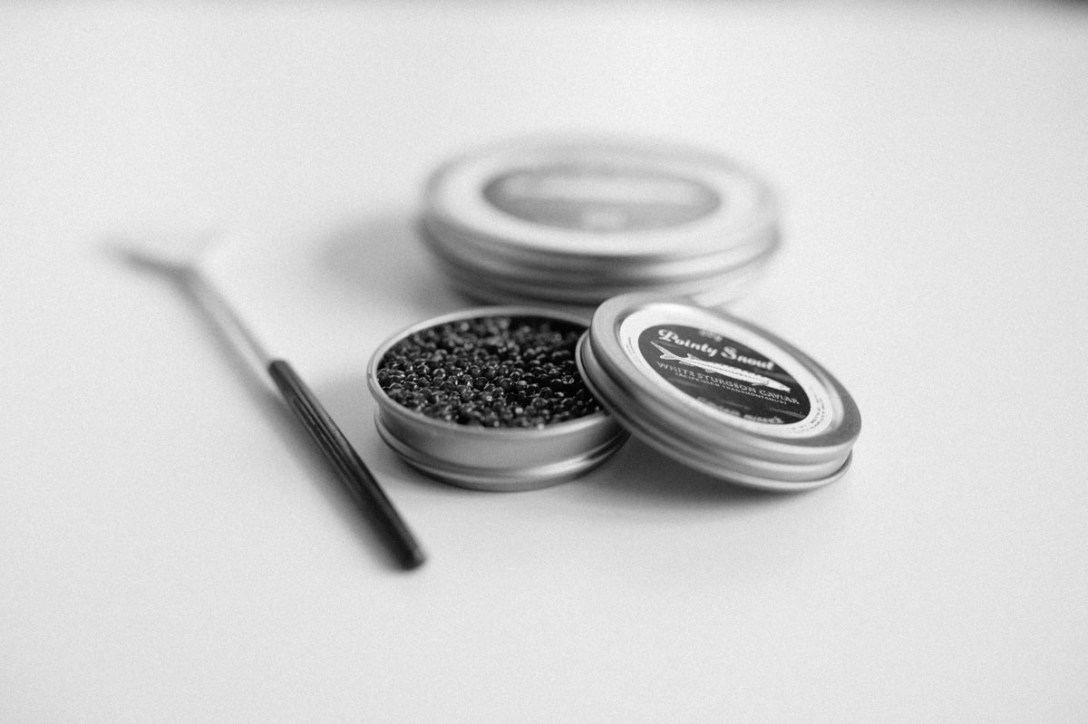 Pointy Snout Caviar