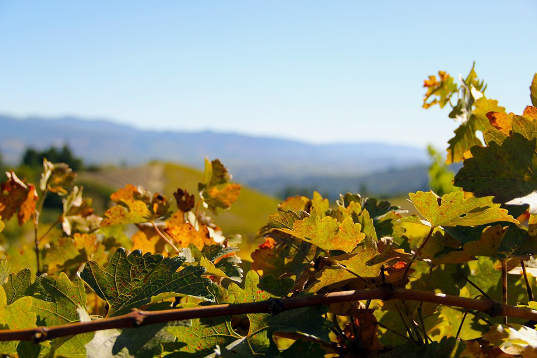 Napa Valley's Newton Vineyard