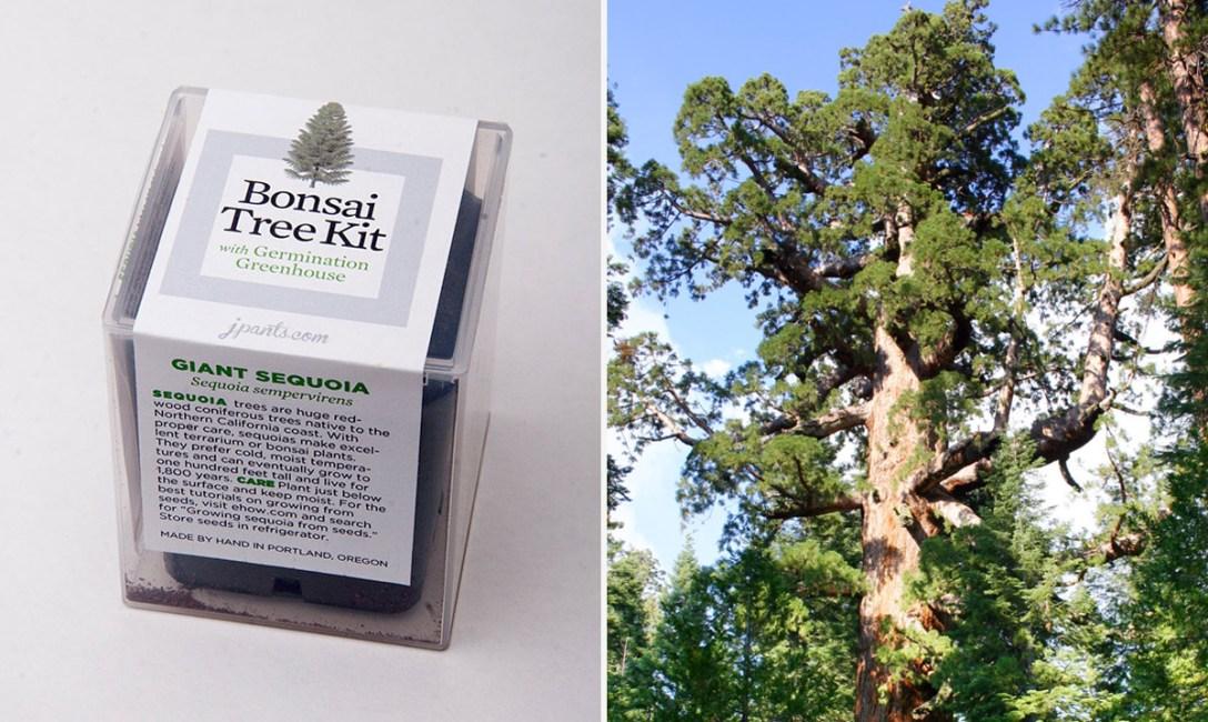 bansai-tree-kit-1.jpg