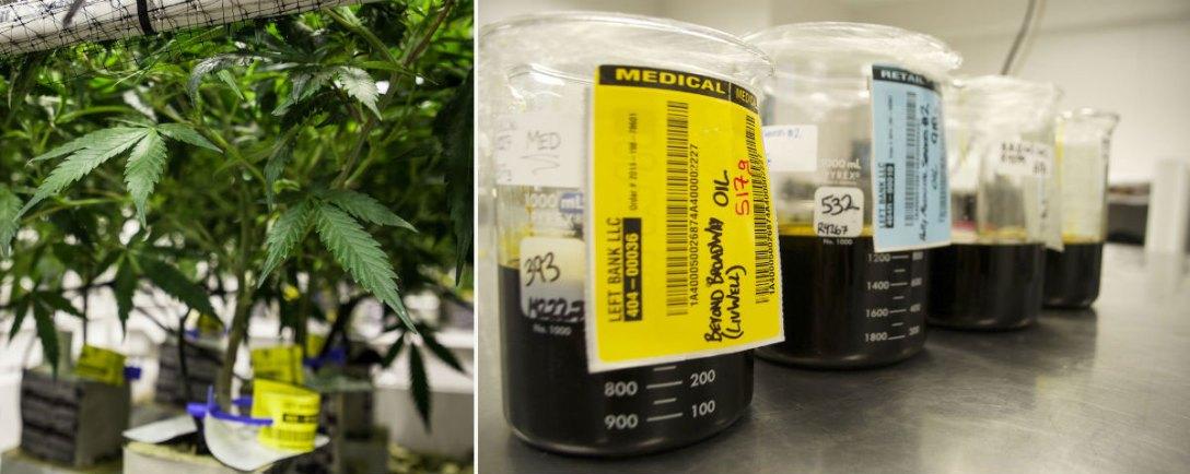 dixie-elixirs-cannabis-edibles-2.jpg