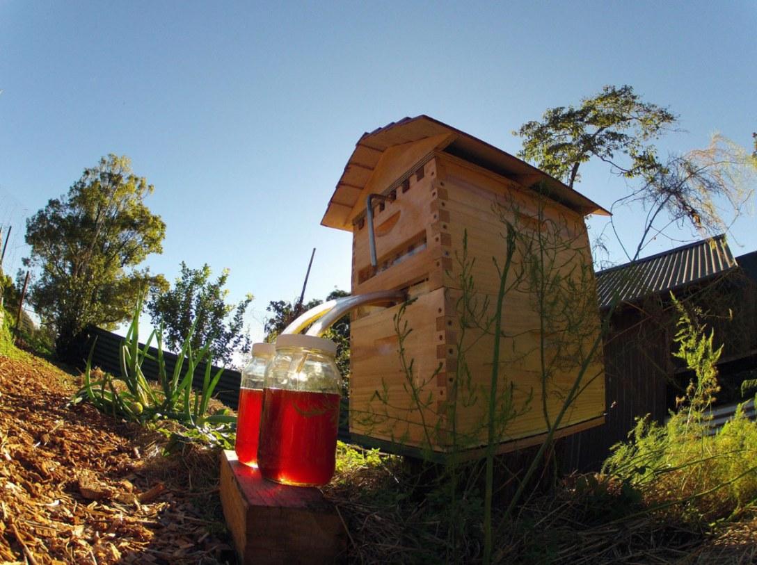 flow-hive-honey-on-tap-1.jpg