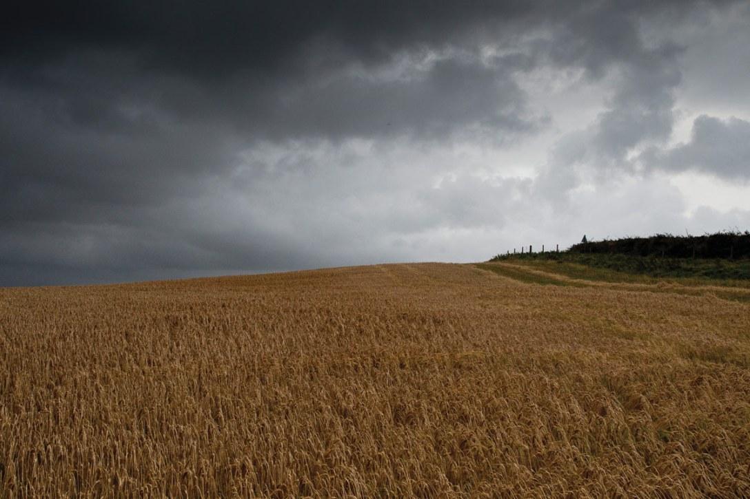 bruichladdich-islay-barley-wheat-barley-field.jpg