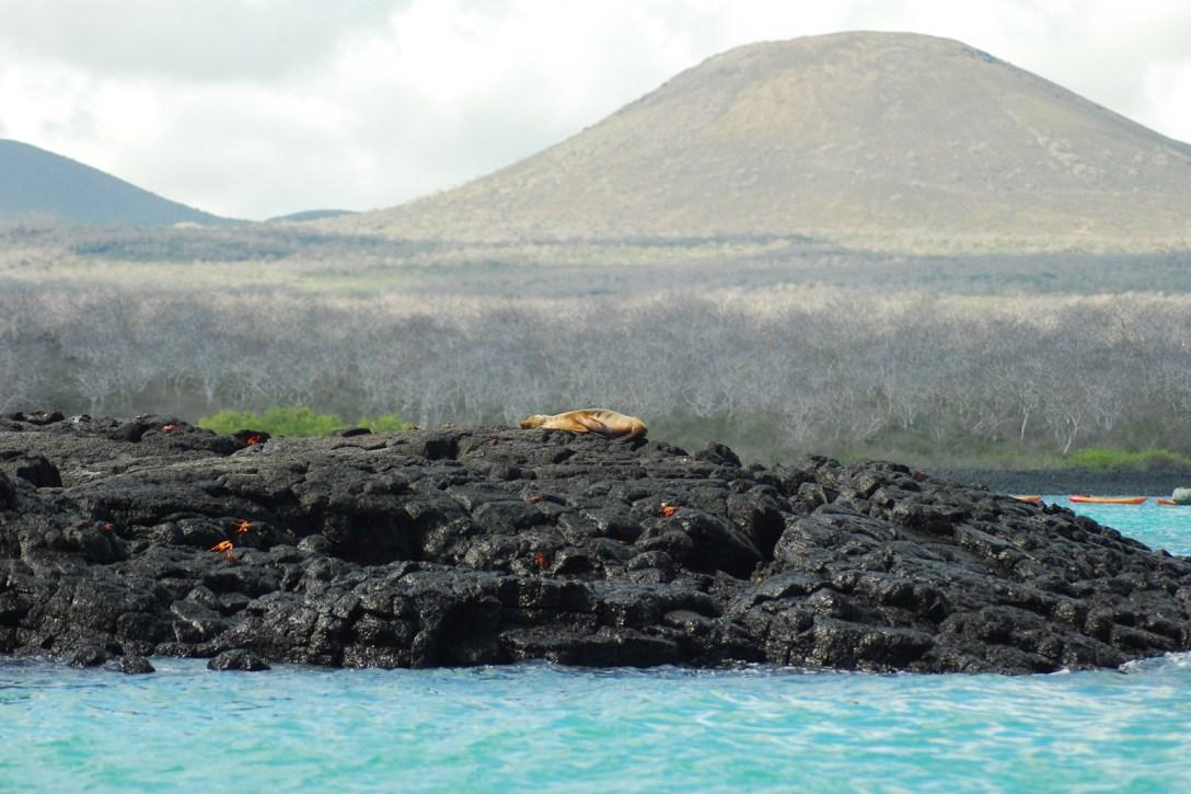 The Galápagos: Nature's Laboratory