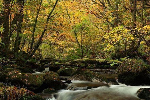 Se puede disfrutar con el cambio de estaciones. En otoño, las hojas de árboles se tiñen de distintos colores.