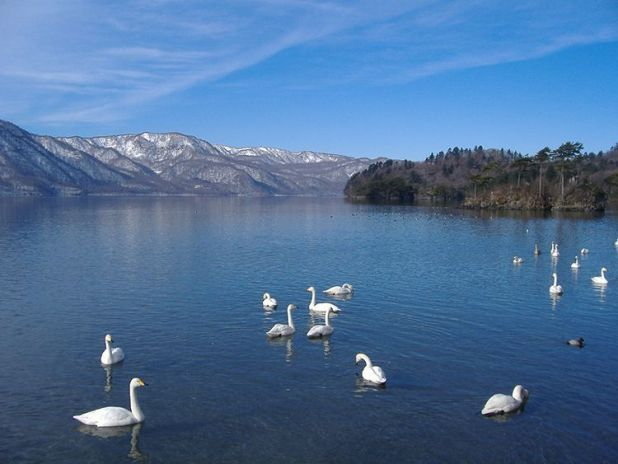 El lago Towada en invierno. Es el auténtico lago de los cisnes.