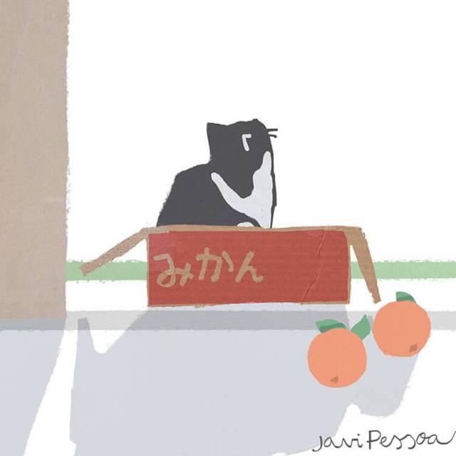 Un gato está dentro de la caja de cartón de mandarinas.