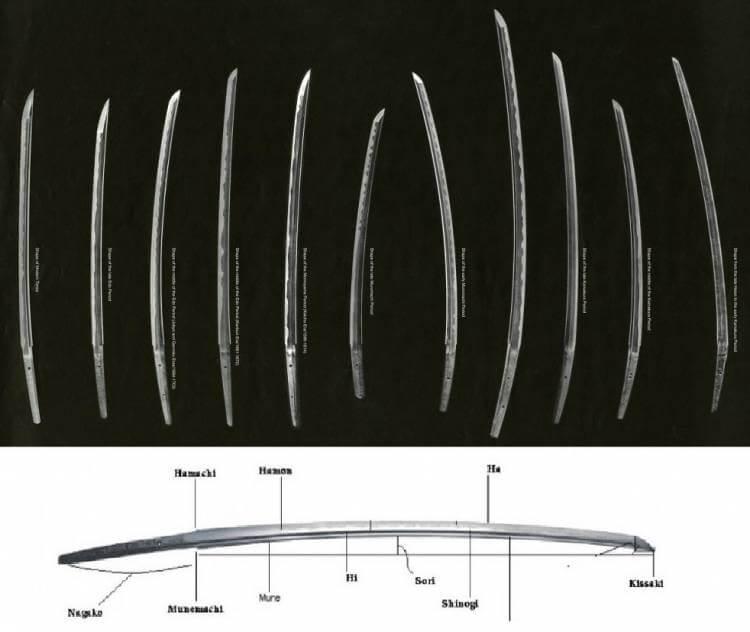 Partes de la hoja y diferentes tipos de curvatura según diferentes épocas.