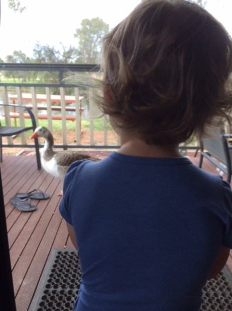 Goose on our deck