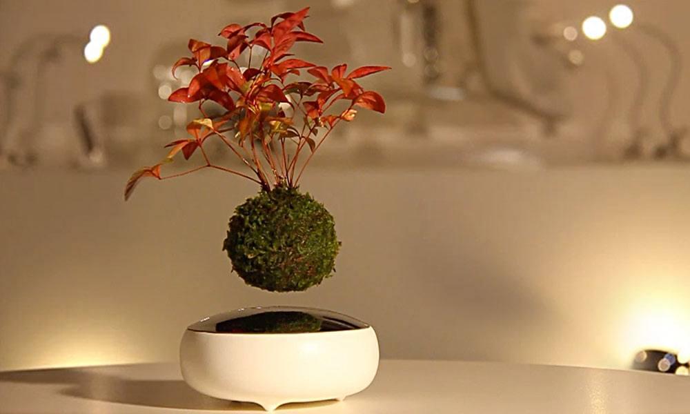 Air Bonsai Floating Plants Cool Material