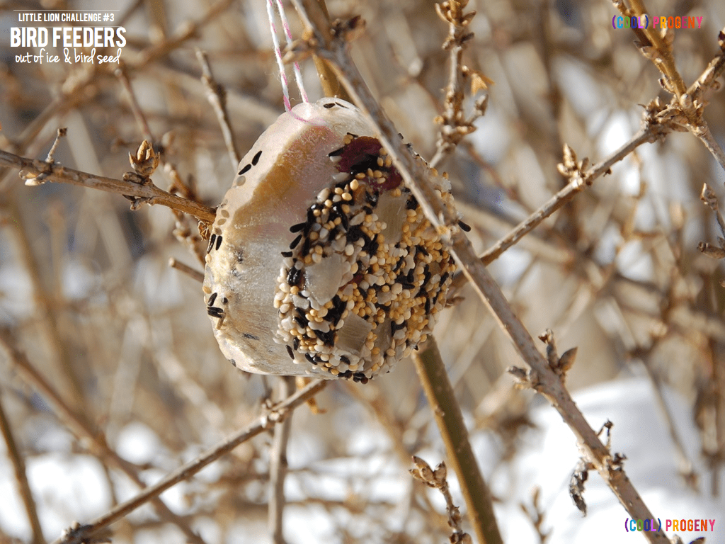 Little Lion Challenge Make An Ice Cube Bird Feeder