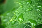 Stock Image Rain