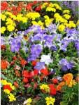spring-flower-garden
