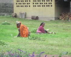 Les jardineres / Las jardineras