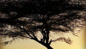El negocio de la información: informar ya no es transmitir la realidad sino anunciar lo que más se va a vender africa alegria gambo alegria sin fronteras dr alegria etiopia