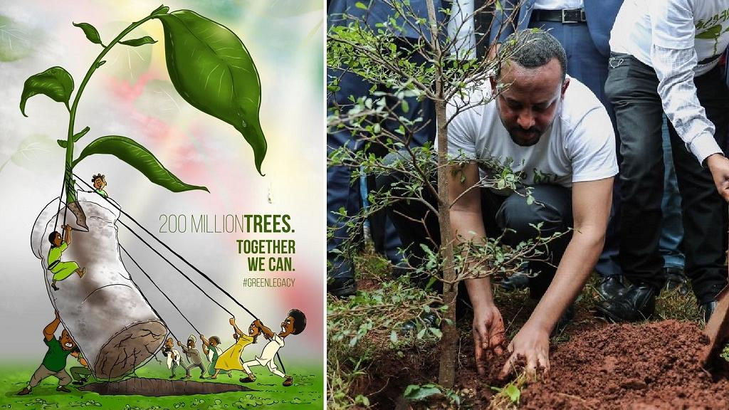 Ethiopia 'breaks' tree-planting world record africa